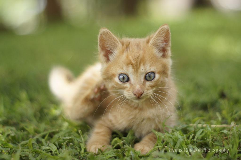 Pet Photography Cats Evans Cheuka Photography