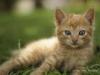 Pet Photographer Wolverhampton Cats